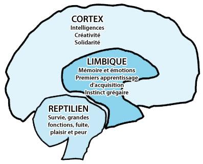 cerveau-influence
