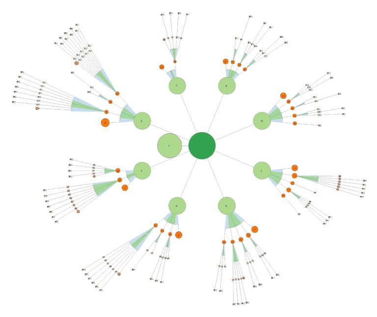 Cocon sémantique - visualisation